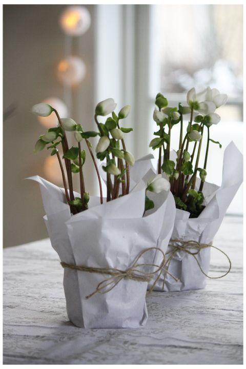Maak je huis klaar voor de feestdagen – met winter bloemen | Maison Belle: