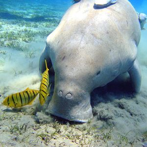 Help Save Okinawa Dugong and Coral Reef Ecosystem. http://action.biologicaldiversity.org/o/2167/t/5243/p/dia/action/public/?action_KEY=1798 @Sea Shepherd Conservation Society #defendconserveprotect