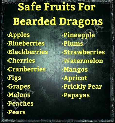Safe fruits for bearded dragons