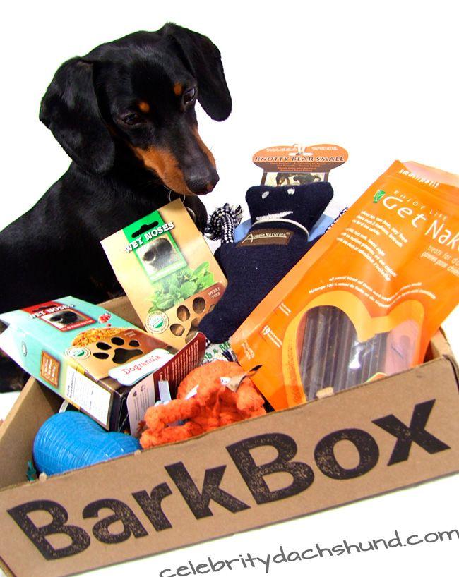 Goodies From BarkBox Dog | Photo Contest Prize: Barkbox !