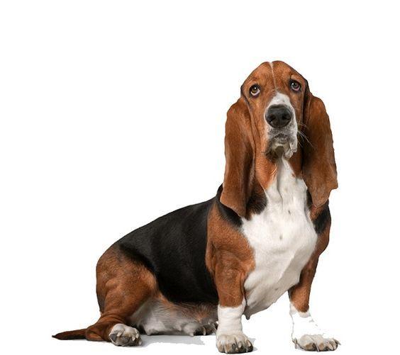 perros Chistes de animales - cerotecnet
