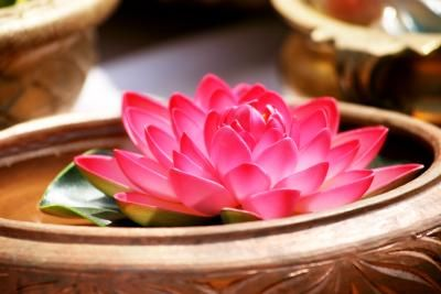 A bowl featuring a single, flowering lotus plant (Nelumbo spp.) can brighten a windowsill or patio. A dwarf variety works especially well in a small-bowl water garden. One dwarf cultivar is the ...