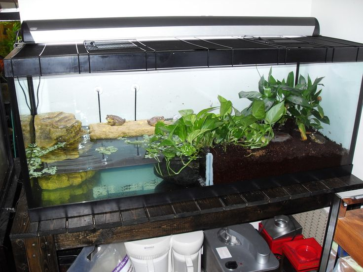 Group Of Pet Frog Habitat For