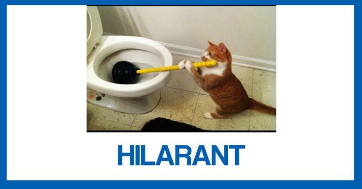 [VIDÉO] Compilation HILARANTE de chats février 2017… À VOIR !