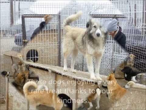 West Wales Poundies Dog Rescue
