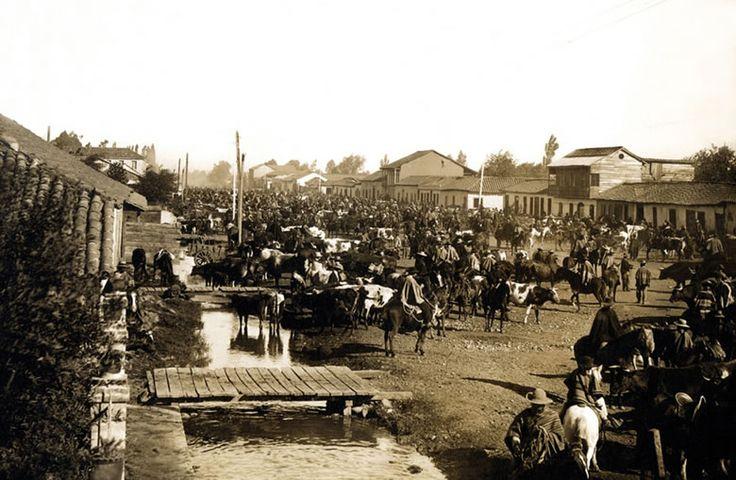 . Feria de Chillán, 1906: Una agitada vida se puede transmitir a través de esta fotografía de autor desconocido, donde se muestra la Feria de Productos Agrícolas en la ciudad de Chillán.