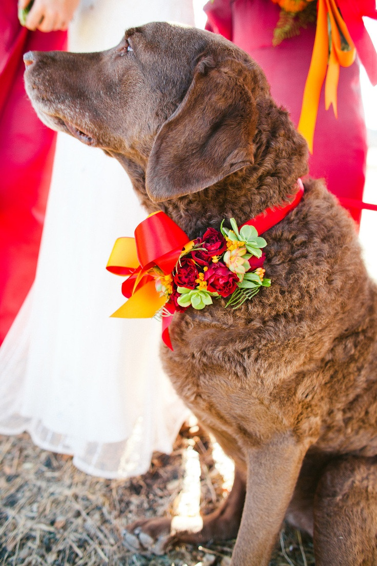 Everyone at this wedding was basking in glorious color ;) Floral Design by moderndaydesign.com, Photography by christinefarah.com: Wedding Parties, Best Friends, Chesapeake Bays Retriever, Floral Design, Flowers Crowns, Flowers Girls, Collars, Chocolates Labs, Wedding Dogs
