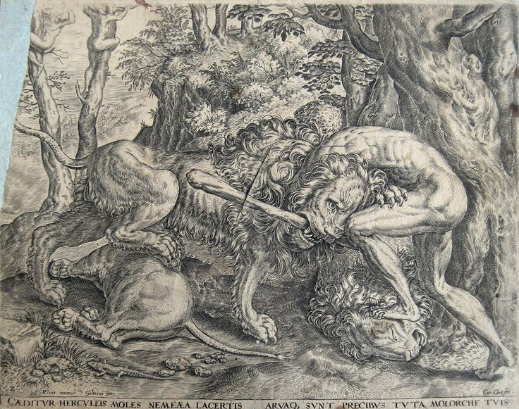 HERCULE avec le lion Hercules lion C. Cort Frans Floris Goltzius 1563   eBay