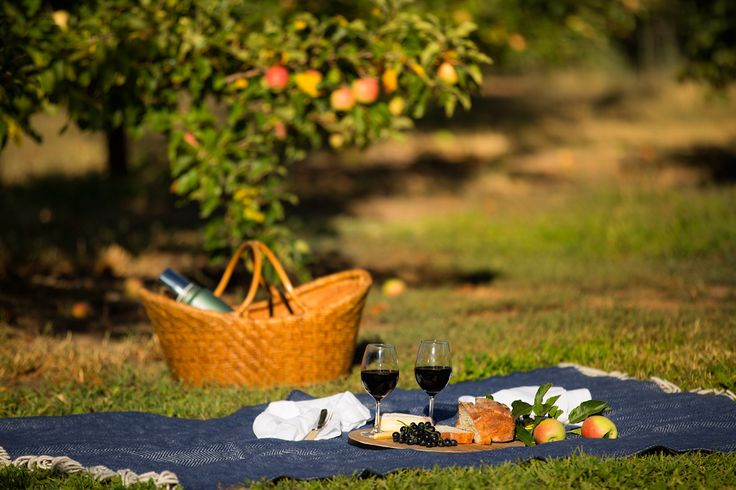 The perfect picnic setting, spread out in Maggie's orchard!