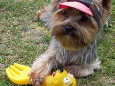 Toto je moje hračka!!