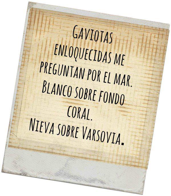 Rosario (@mujercongatos) | Twitter