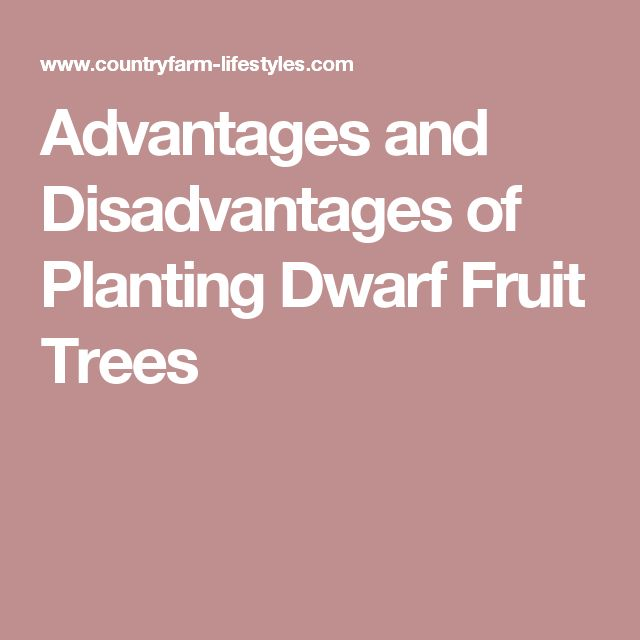 Advantages and Disadvantages of Planting Dwarf Fruit Trees