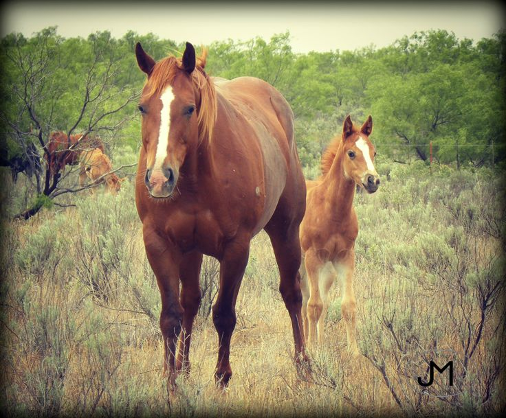 the quarter horse colts poem Testimonials we'd like to share some emails from some of our horse buyers the following poem is shalee's tribute to her friend, scooter ode to my friend by shalee lemmon he's still at gene von ahns (guy who rides my colts) they keep trying to buy him but i'm not ready to part with him yet he must be nice if he.