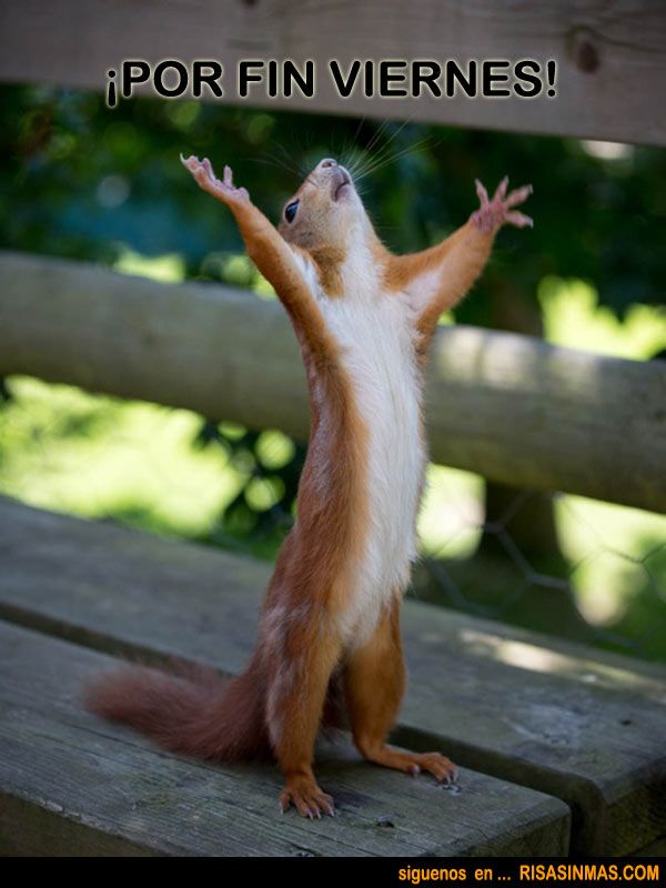 ardilla con las manos en el cielo: ¡Por fin Viernes!