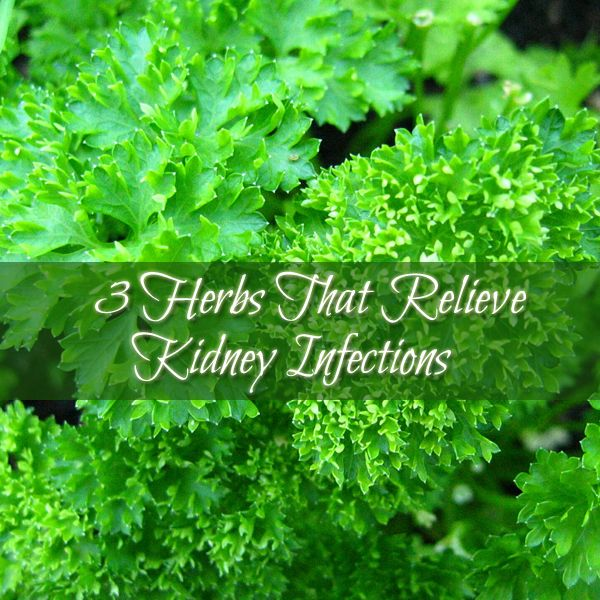 3 Herbs That Relieve Kidney Infections. Kidney infections are a result of a bacterial infection that usually starts out as a urinary tract infection. The bacterium causing the infection can travel all the way to the kidneys, causing an infection there as well. Women are more prone to infections of this kind because of the proximity of the urethra, vagina, and anus.