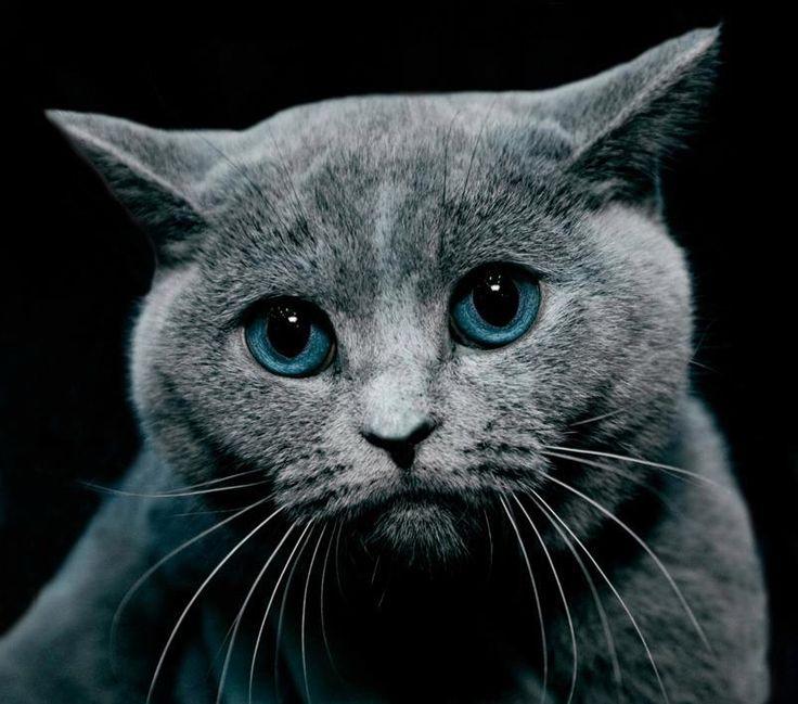 Открытки для, картинки виноватая кошка