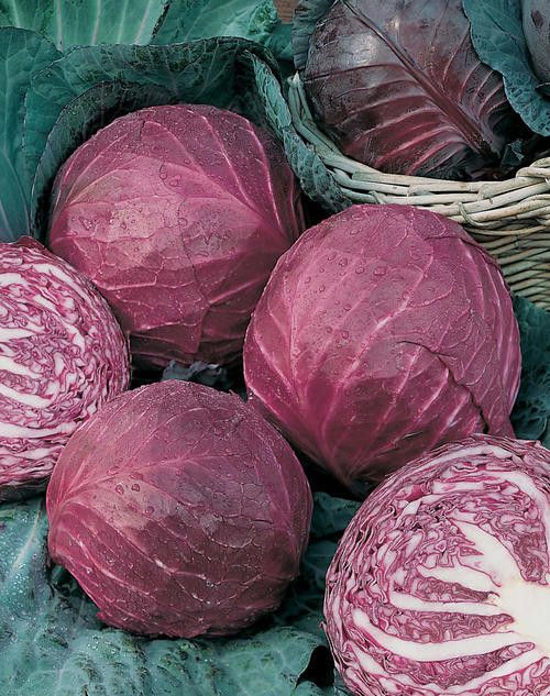 75 days. Organic Red Acre Cabbage is a supreme variety of cabbage and simply the best early open pollinated Red Cabbage variety available. Red Acre is a tasty organic cabbage variety that produces sho