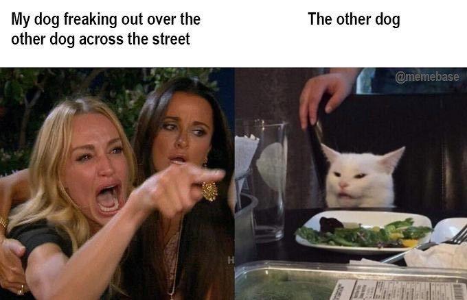 Los memes de 'Dos mujeres gritando a un gato' son demasiado aggro