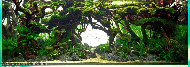 AGA Aquascaping Contest Entry Aquarium Pinterest - Beautiful photography reveals underwater complexity aquariums