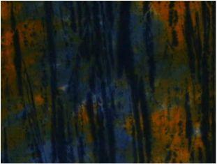 Tamarind and Night Blue Stripe-BF-6