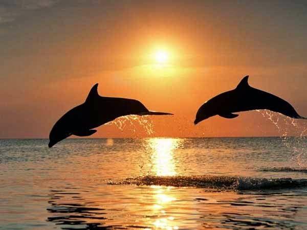 Pantai Lovina adalah pantai terkenal yang ada di bali utara. Di pantai lovina anda dapat melihat lumba-lumba di alam liarnya secara langsung ke laut lepas