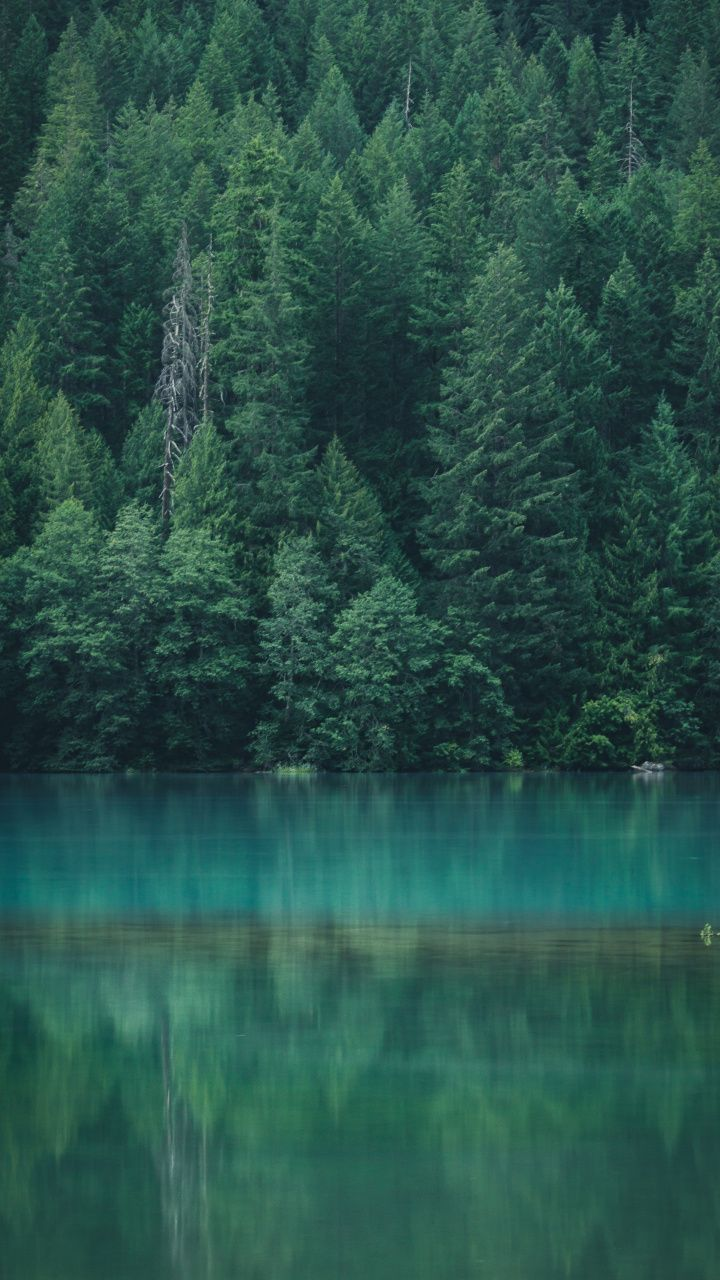 Lake Trees Reflections North Cascades National Park 720x1280 Wallpaper Forest Wallpaper Diablo Lake Forest Wallpaper Iphone