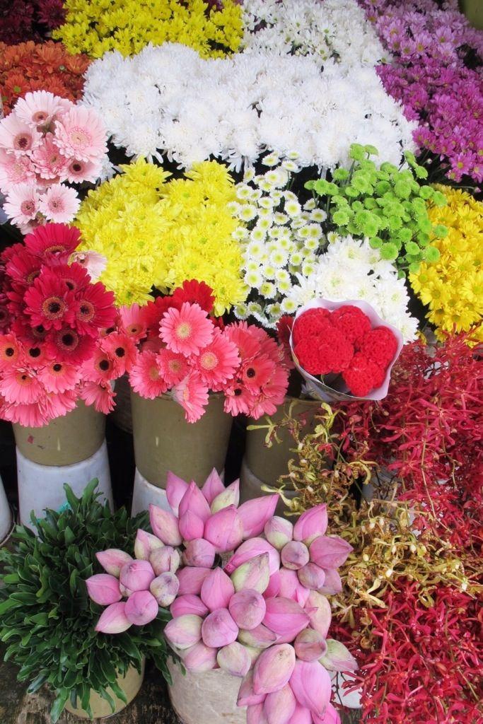 Flowers | kitty manu