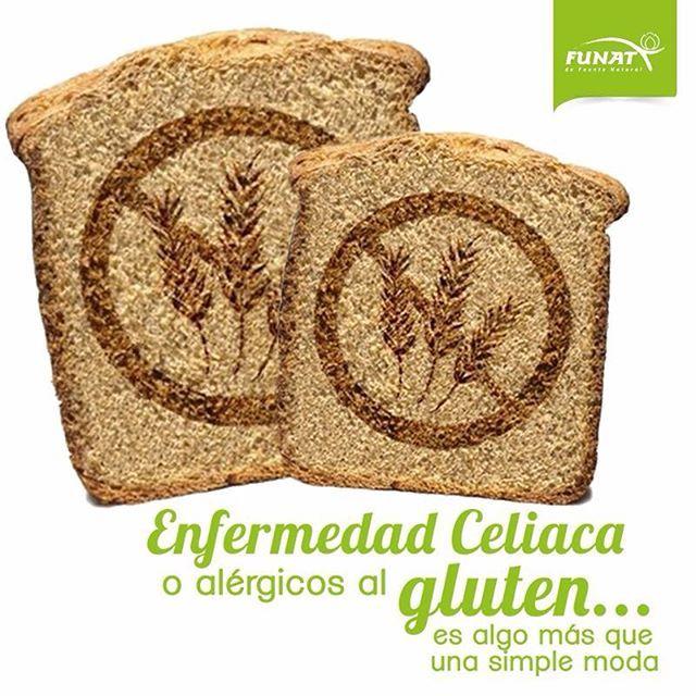 La #EnfermedadCelíaca (EC) es un intolerancia permanente al gluten del trigo, cebada, centeno y probablemente a la avena que se presenta en individuos genéticamente predispuestos. Es caracterizada por una reacción inflamatoria que ataca la mucosa del intestino delgado lo que dificulta la absorción de macro y micronutrientes. Los síntomas más frecuentes son: pérdida de peso, de apetito, fatiga, náuseas, vómitos, diarrea, distensión abdominal, pérdida de masa muscular, retraso del…