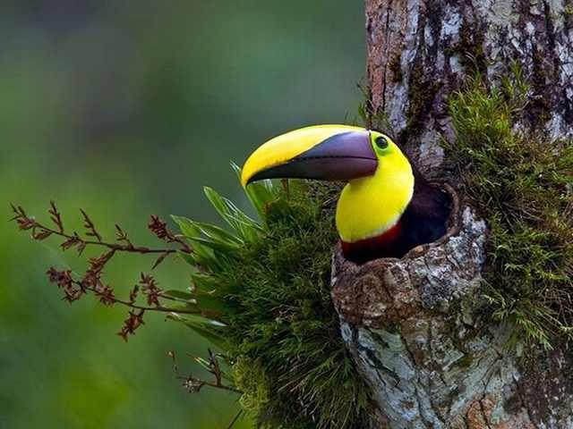 As Mais Incríveis Fotos Do Mundo Selvagem