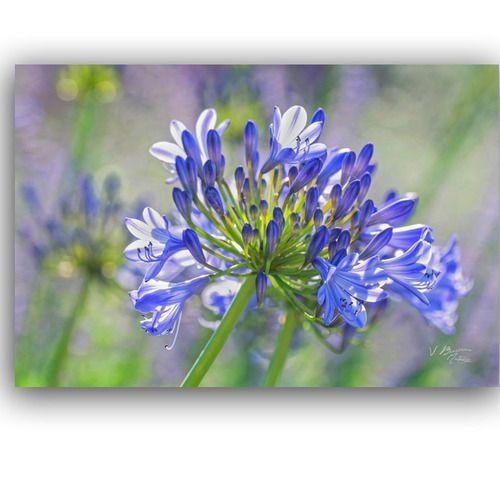 5 Cartes Postales Fleurs Des Parcs Et Jardins Violet Mauve Rose