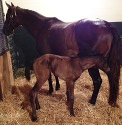 DYNAFORMER's Last Foal Is a FillyHors Racing, Foals, Horsin Around Landon, Famous Racehorse, Thoroughbred Mare, Obsession Racehorse, Thoroughbred Racing, Horses Racing, Dynaformer