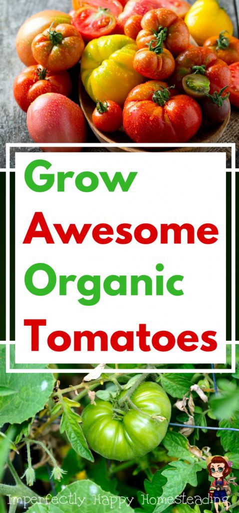 Tips for Growing Awesome Organic Tomatoes - tips and tricks to help you have an awesome harvest.