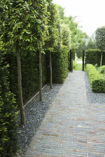Combination of preached and solid hedging. Poducarpus front area main entrance