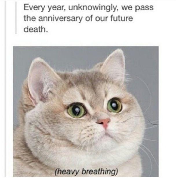 The cat haha