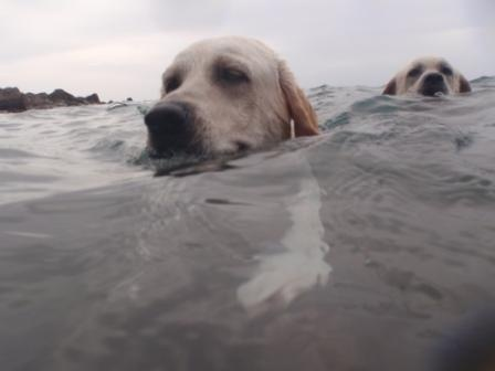 Roscos and Kane swimming at Well's Bay, on Saba dutch Caribbean