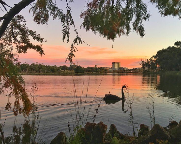 Sunset, Lake Ginninderra, Black Swan