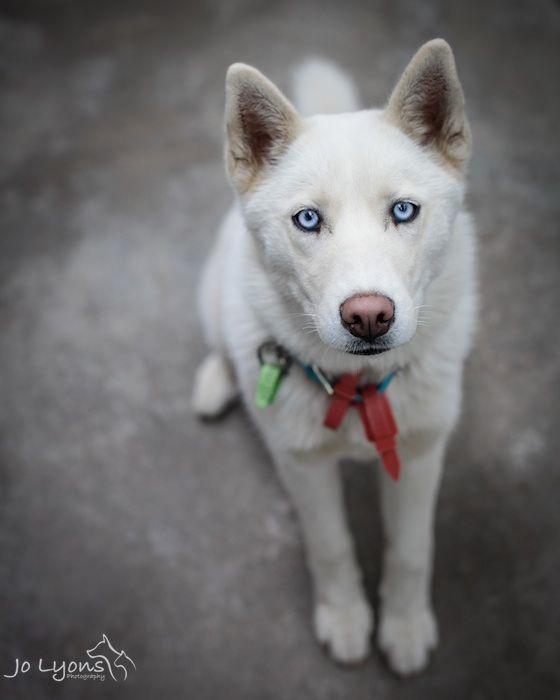 Shelter Dog -