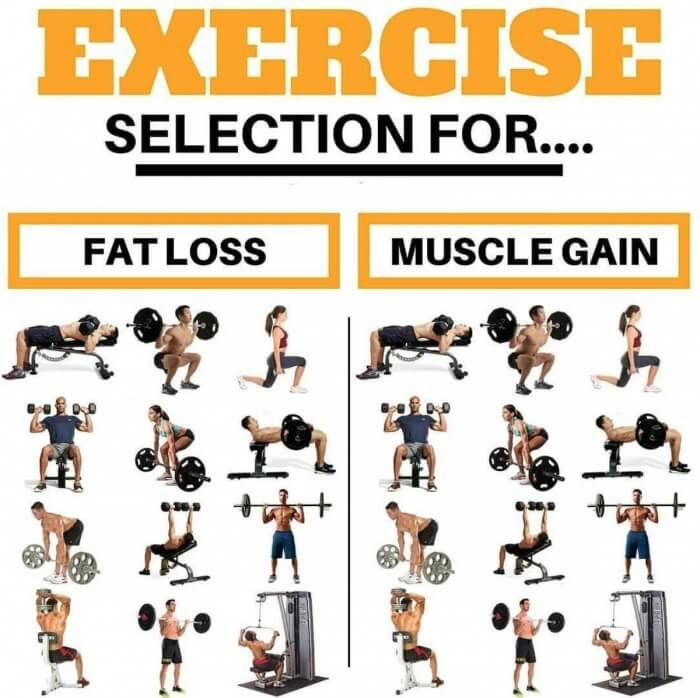 Exercise Selection For Fat Loss And Muscle Gain Best Fit Tips