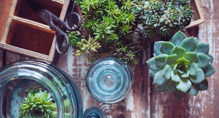 Rośliny domowe, które oczyszczają powietrze i nie są trujące dla kotów