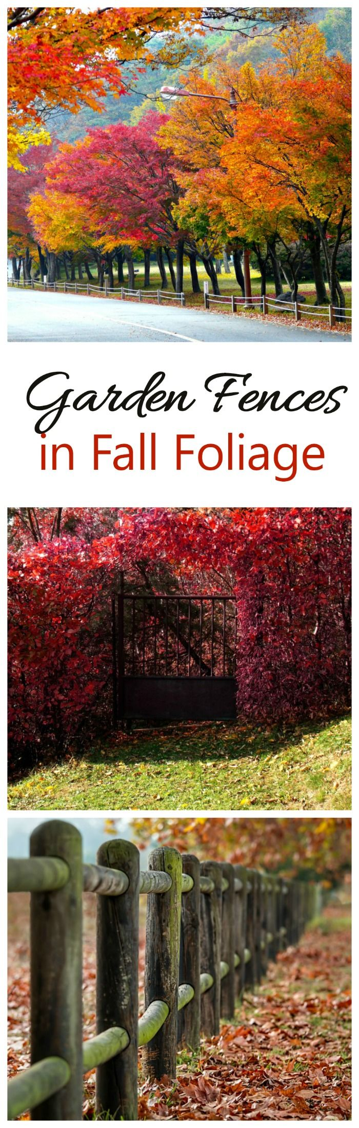 Is fall foliage at its peak where you live? Here in NC, the colors are ablaze. In these photos garden fences and gates, surrounded by the colorful fall leaves, tell the story of the change of seasons beautifully. I was born in Maine and fall has always been my time of the year. Nature turns on ...
