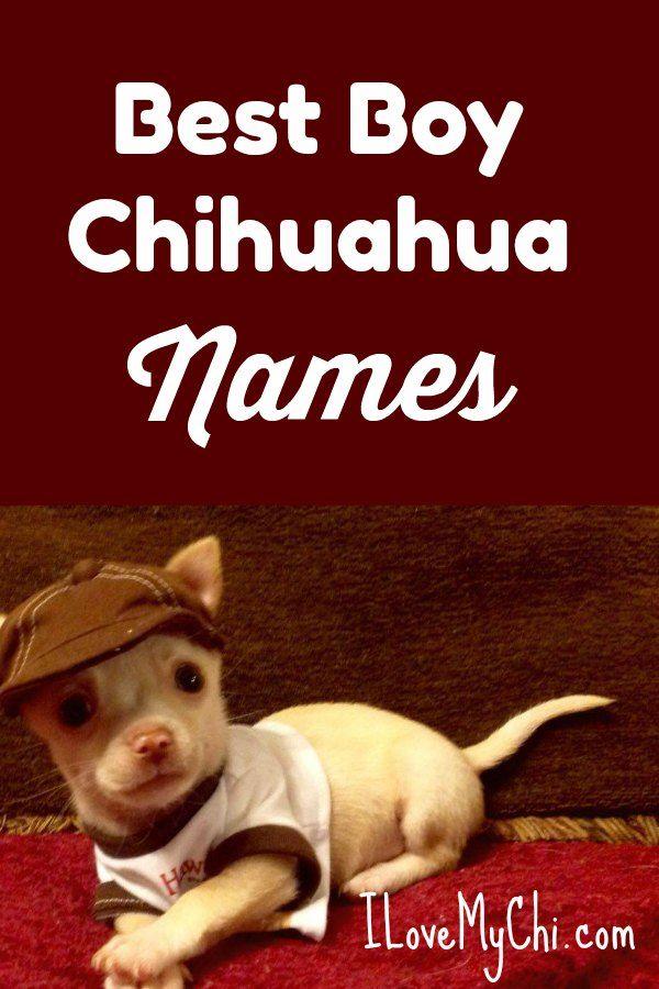 Best Boy Chihuahua Names Chihuahua Names Dog Names Chihuahua