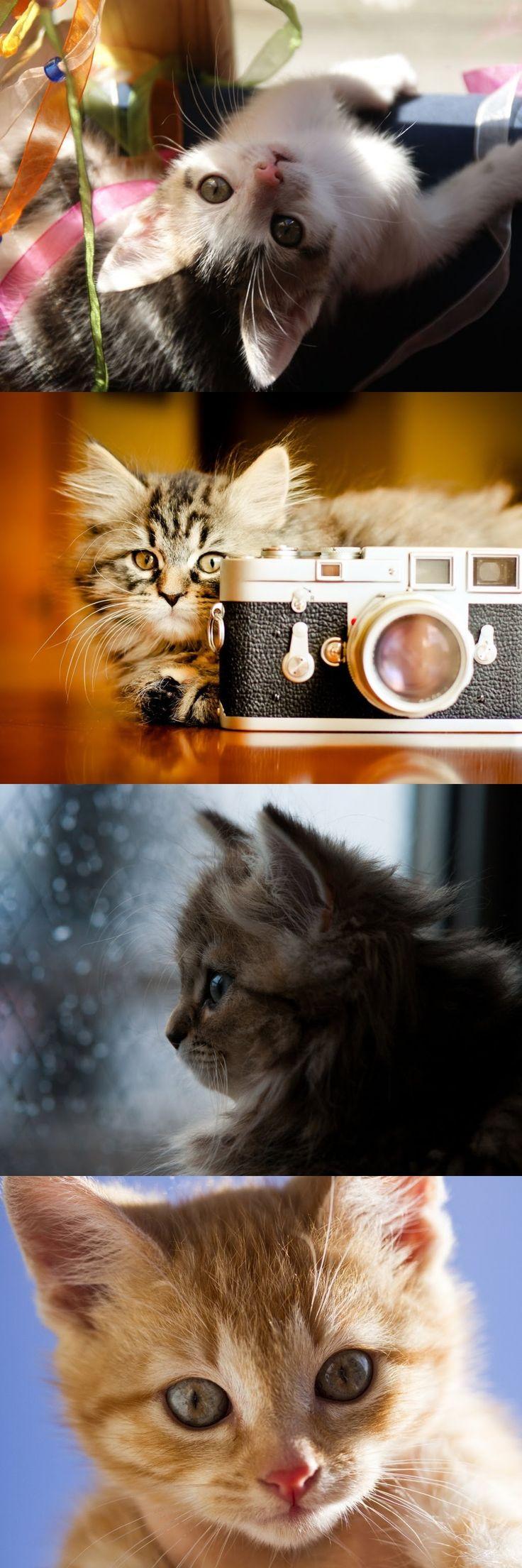 Best 25 Cute kitten videos ideas on Pinterest