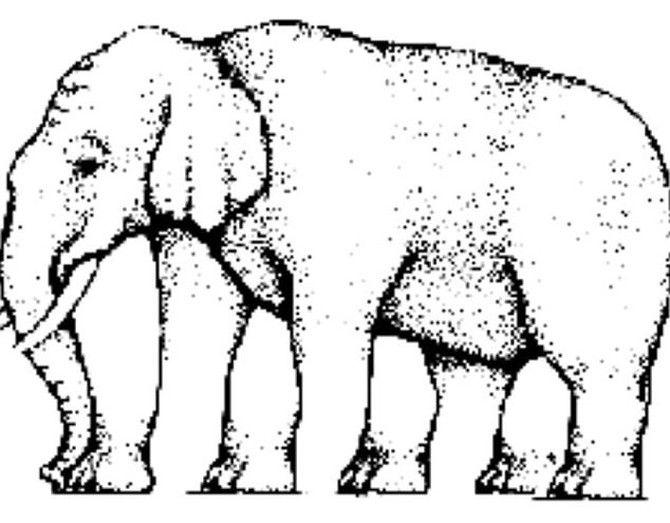 Test u kojem 99% ljudi pogreši! Da li vi vidite koliko slon ima nogu?