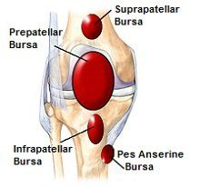 Bursa help to reduce friction in the knee but can easily become inflammed. Find out more
