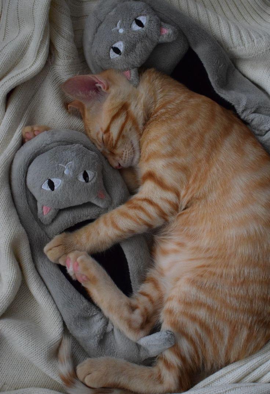 Pink Dream 💤#Cute Animals #Best cats #kitten cute #sandy #photography #Meow❤😸👸📷
