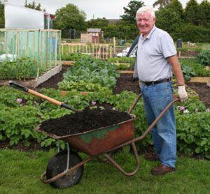A barrow load of compost - Eden Allotment Gardens, Carrickfergus, UK