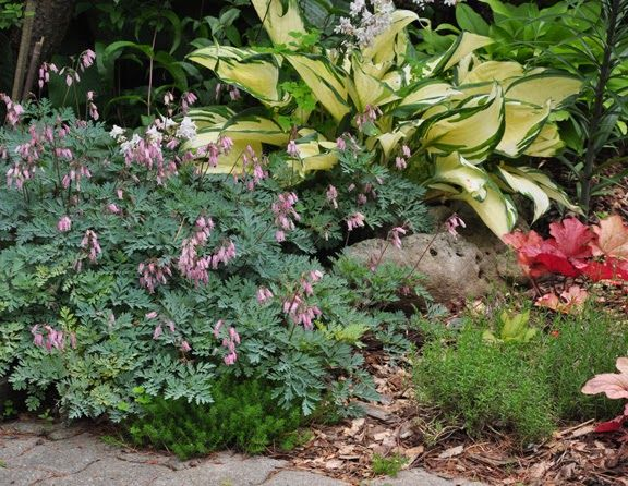 50 best otterson images on Pinterest Flower gardening Plants