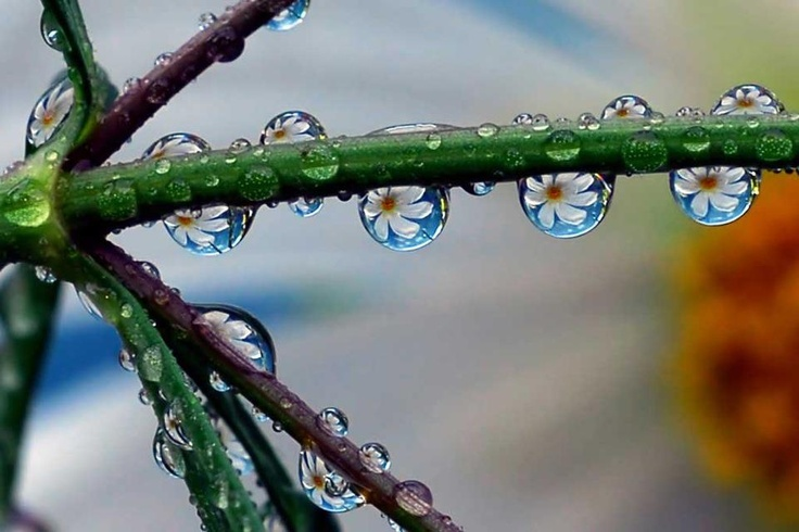 """Se não houver frutos, valeu a beleza das flores."": Daisies Chains, Dew Drop, Raindrop, Macros Photography, God Grace, Dewdrop, Water Droplets, Little Flowers, Rain Drop"