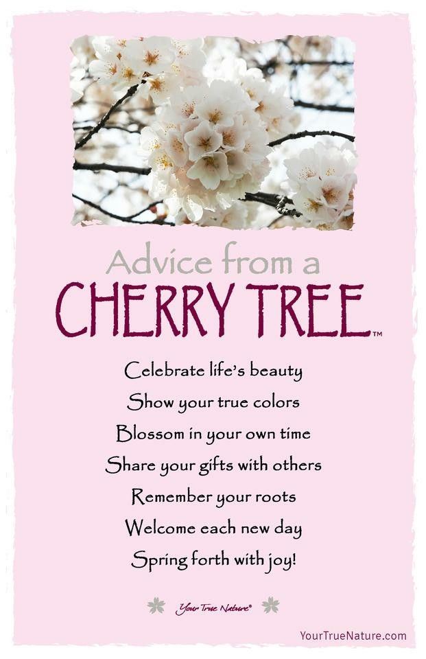 aDViCe FRoM a CHeRRy TRee