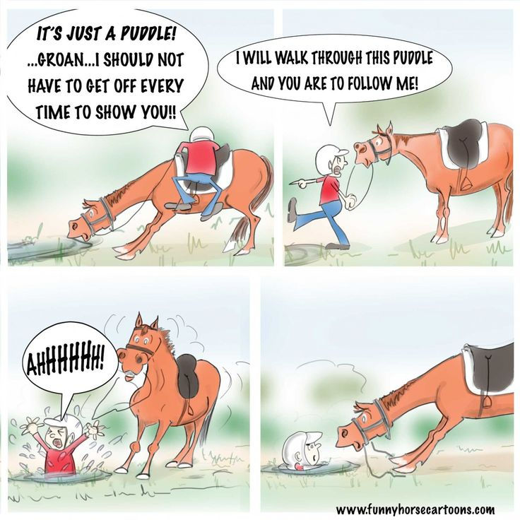 Pin by Meredith Lawless on Funny horse memes in 2020